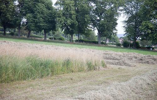 Wiesen Weiden Bäumlihof Basel Riehen