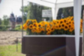 Pollenlose Sonnenblumen Bäumlihof Basel Riehen
