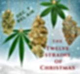 12 Strains  of Christmas.jpg