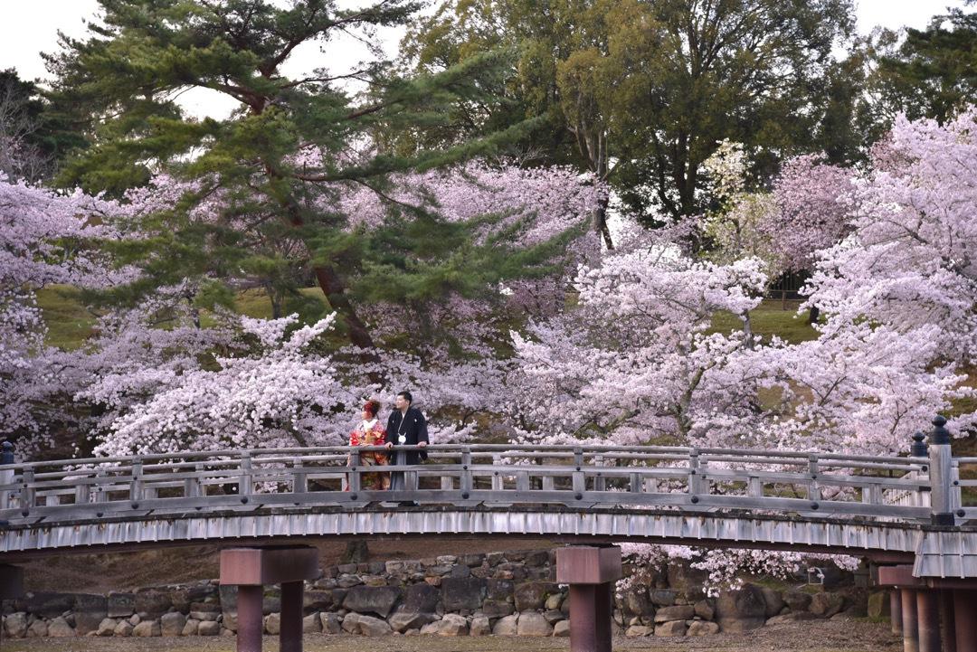 kimono_sakura_-_13