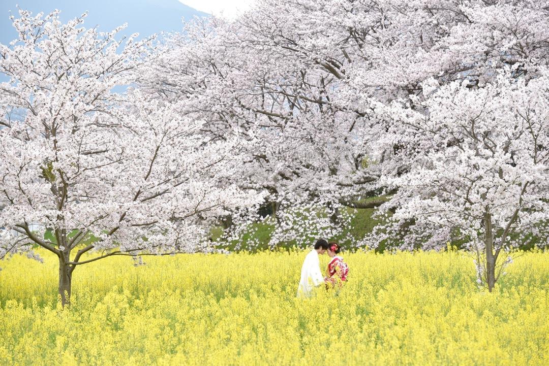 kimono_sakura_-_8