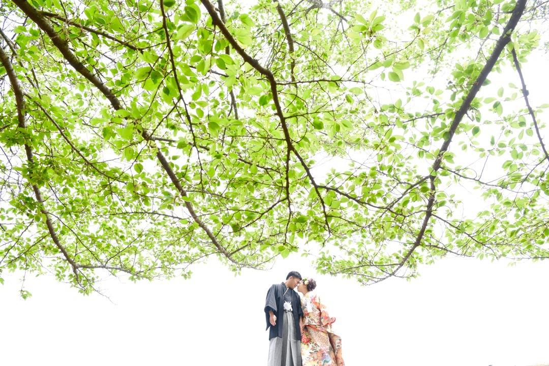 kimono_wakakusa_-_29
