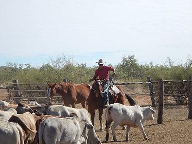 cowboy-985299_1920.jpg