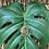 Thumbnail: Leo Lion Necklace