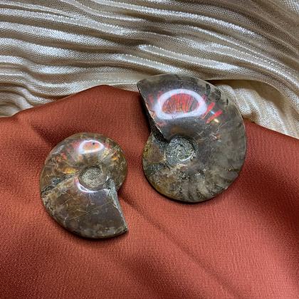 Ammonite Crystal