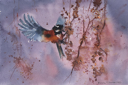 Aquarela passarinho