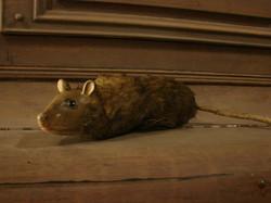 Grandma's Rat