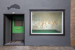 Alex Blackfish Gallery-2copy