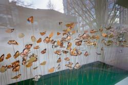 Alex Blackfish Gallery-3