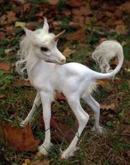Baby white unicorn