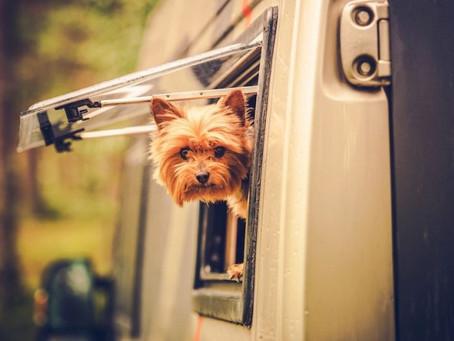 How to manage your animal during your trip - Hoe u uw dier tijdens uw reis kunt beheren