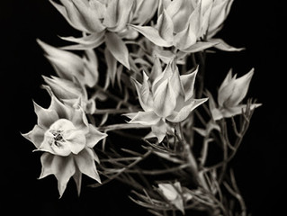 「Botanical Art 」写真に挑戦!