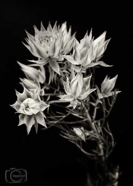 第3回「花を撮る、写真を作る」ワークショップ 参加者の作品より、<デジタル写真>