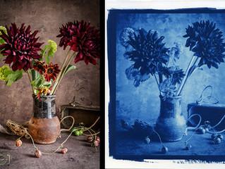 ワークショップ「花を撮る、写真を作る」7月開催