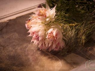 10月「花を撮る、写真を作る」ワークショップ開催しました。