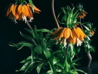 ワークショップ「花を撮る、写真を作る」