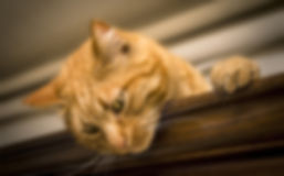 cat-2184682.jpg