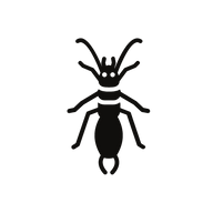 earwig vector in black.png