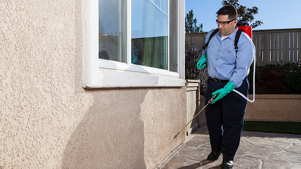 performing pest control service