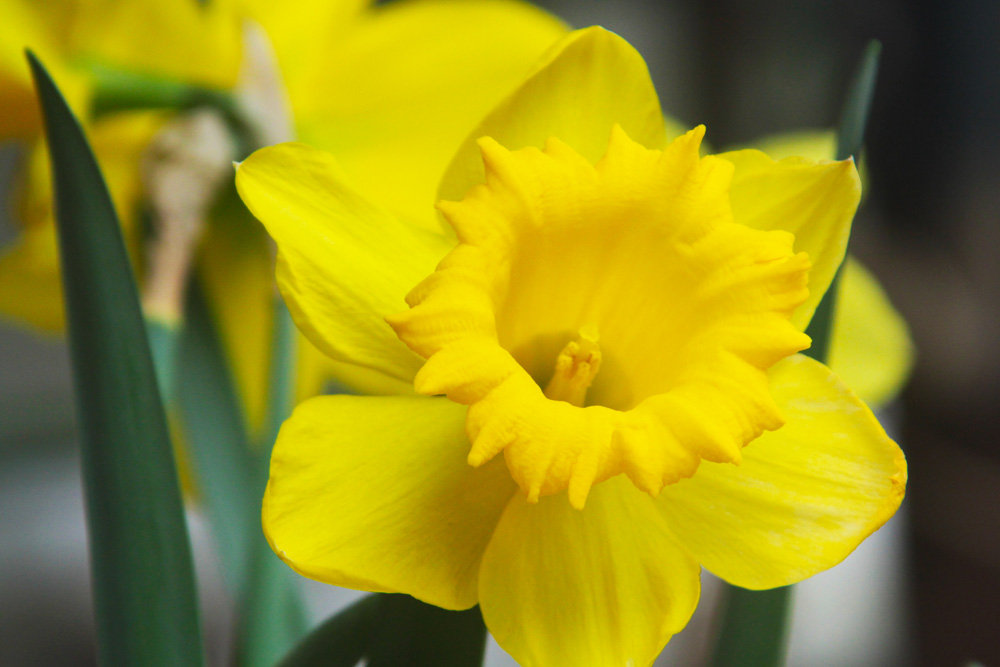 Bloom into your fullness this spring
