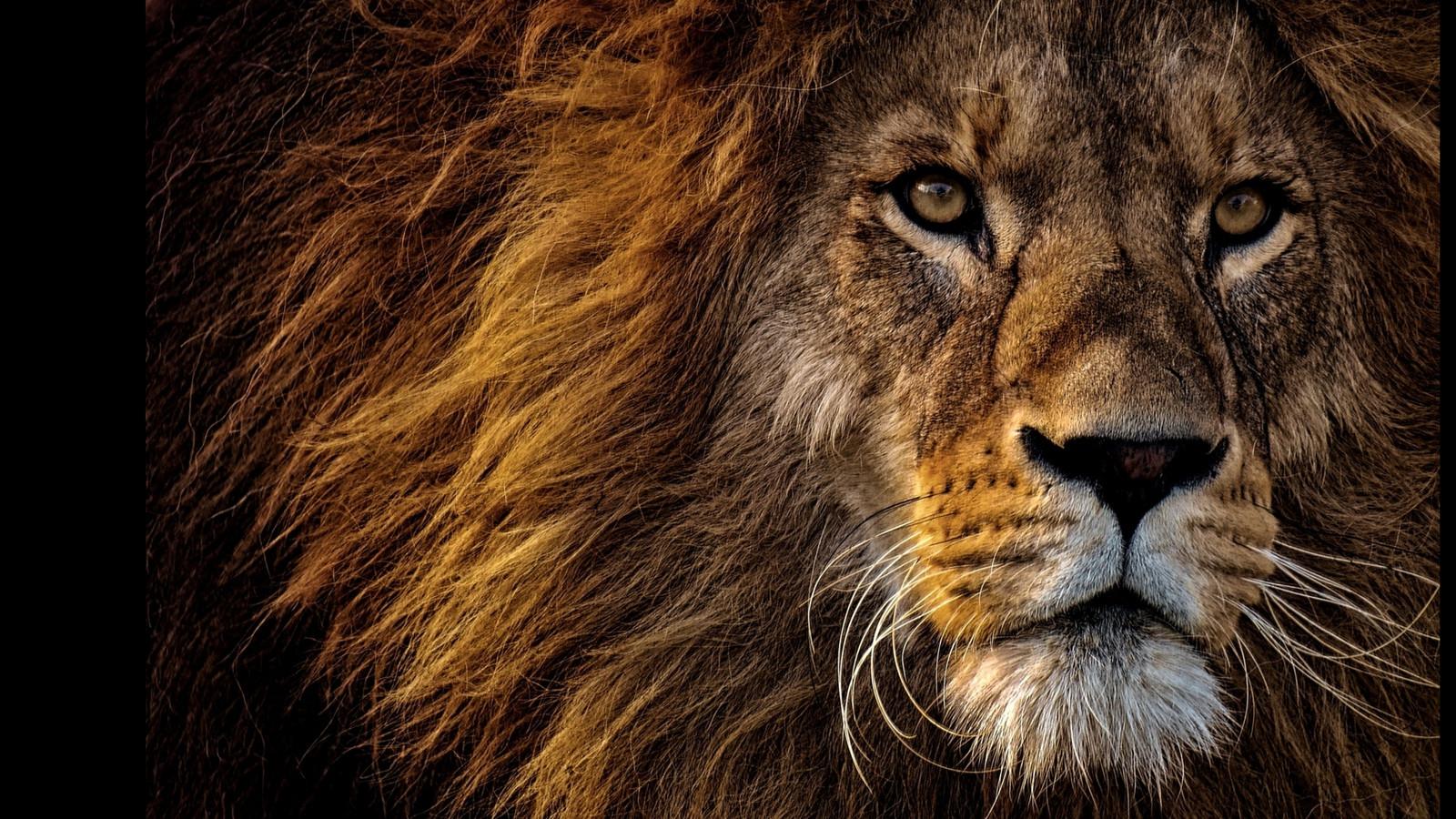 LionPAQ-05.JPG