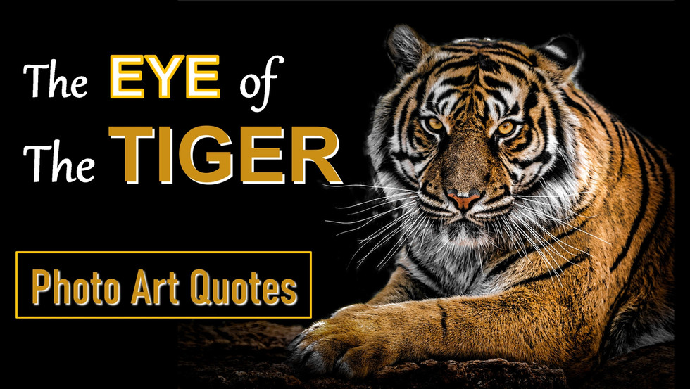 The Eye of the Tiger Photo Art Quotes