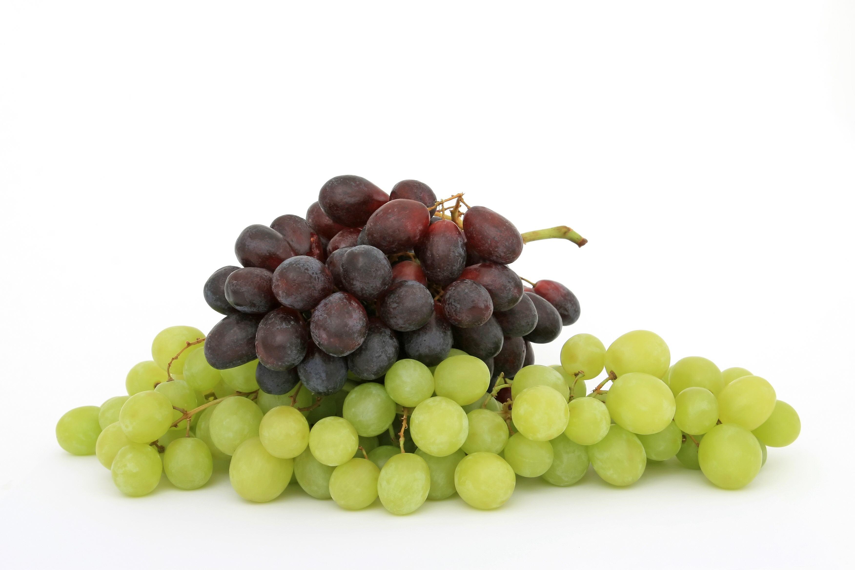 Fruit-01