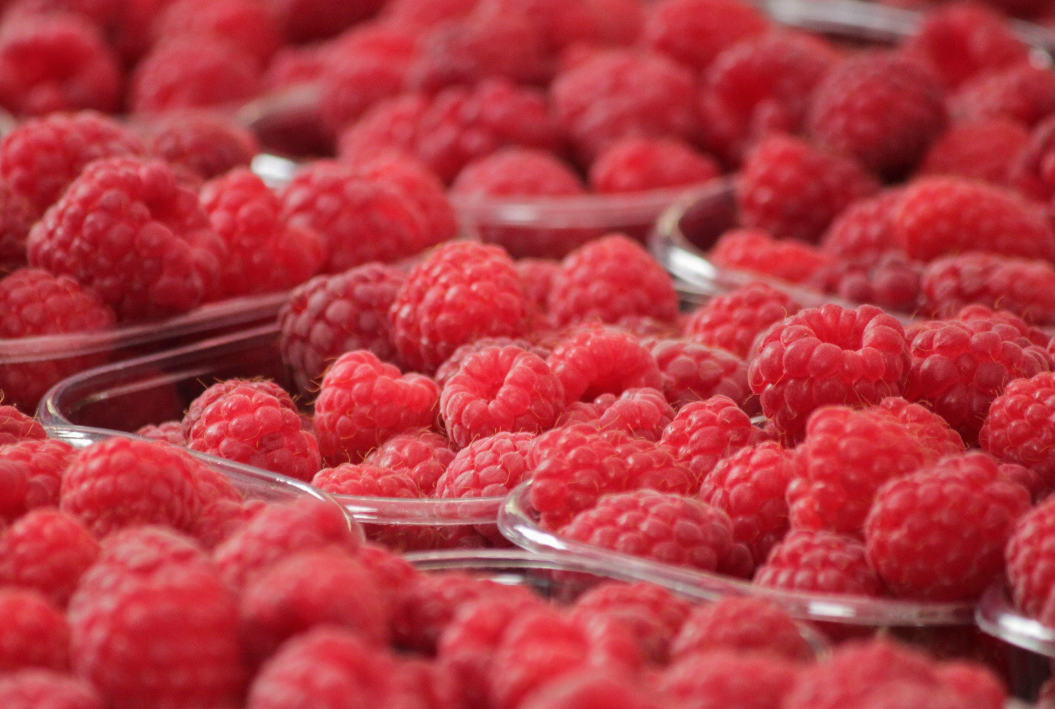 Fruit-51