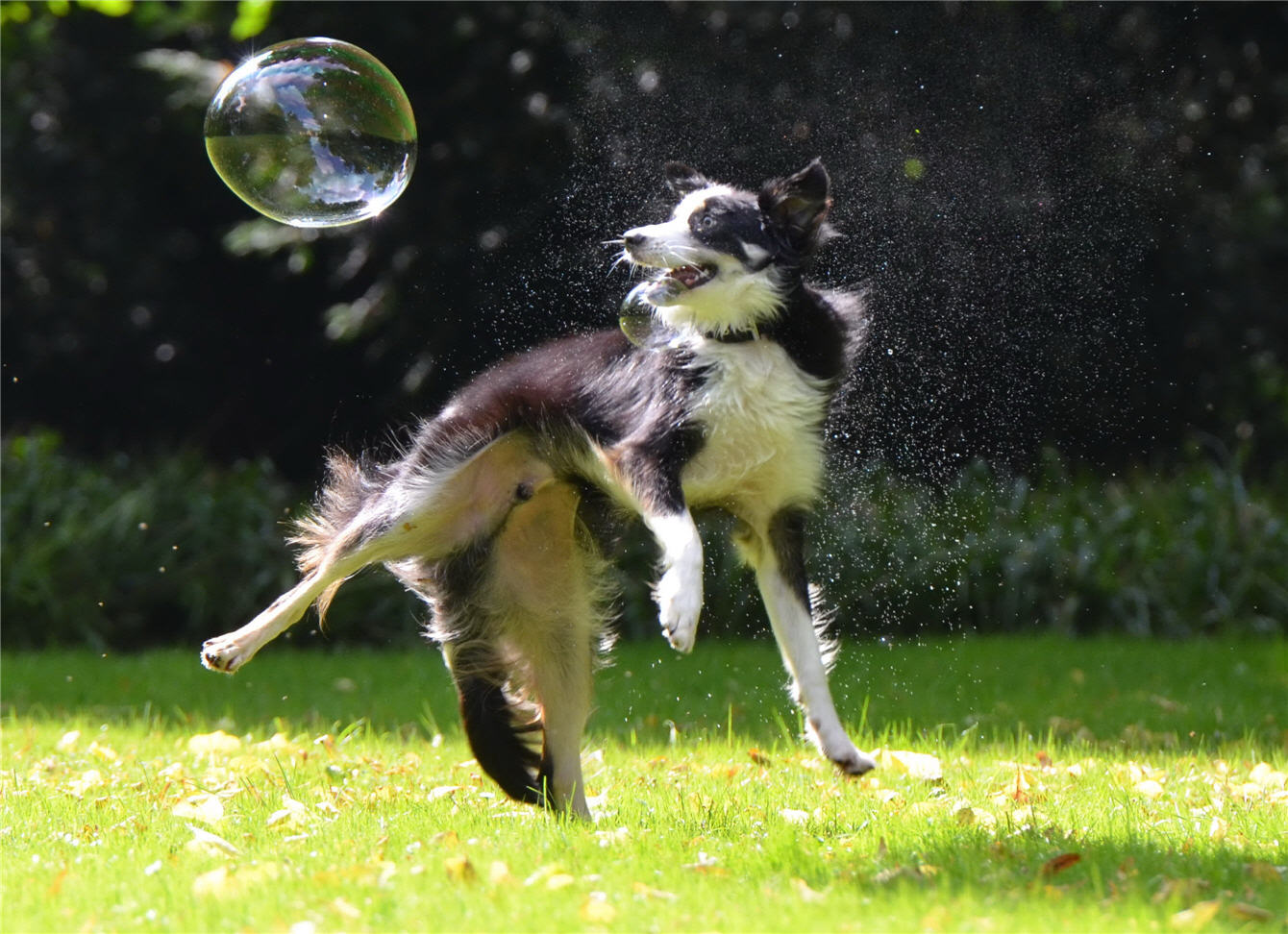 dog and soap-bubbles