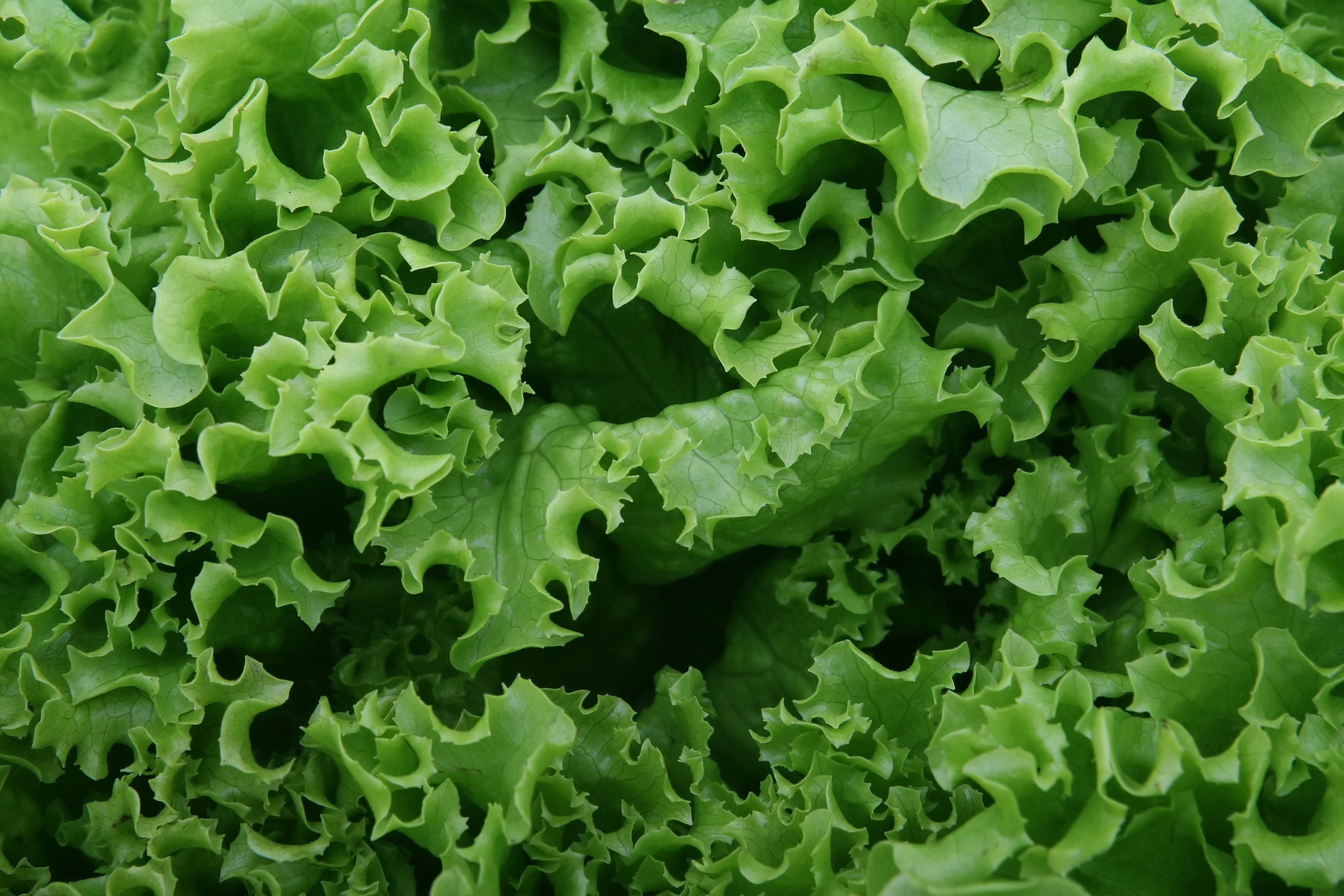 Vegetables-18