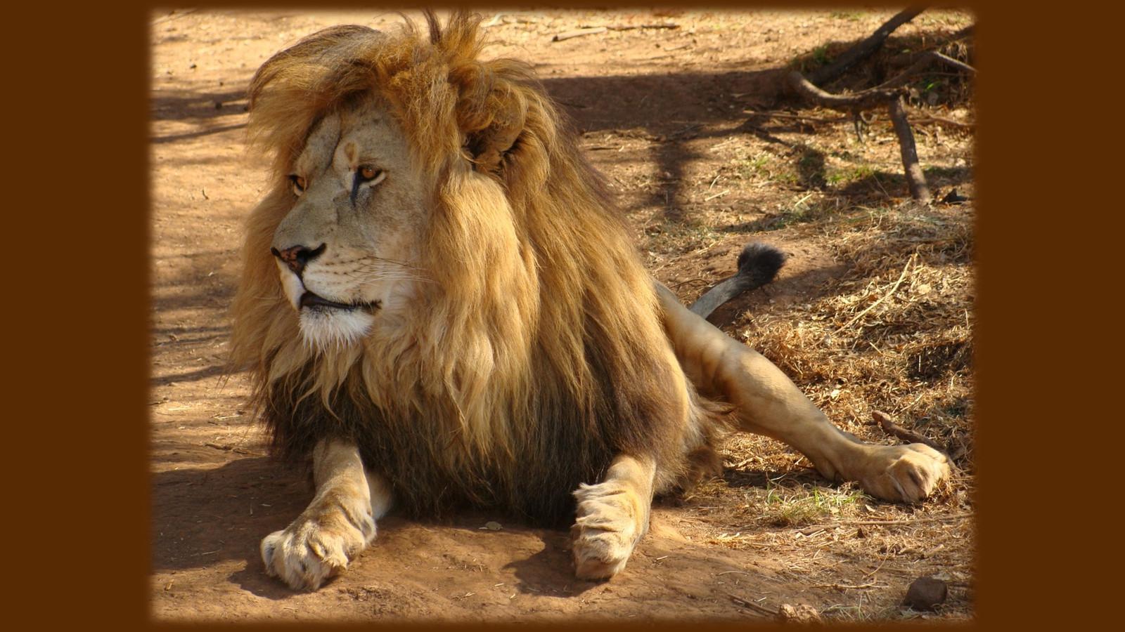 LionPAQ-07.JPG