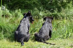 dogs side by side