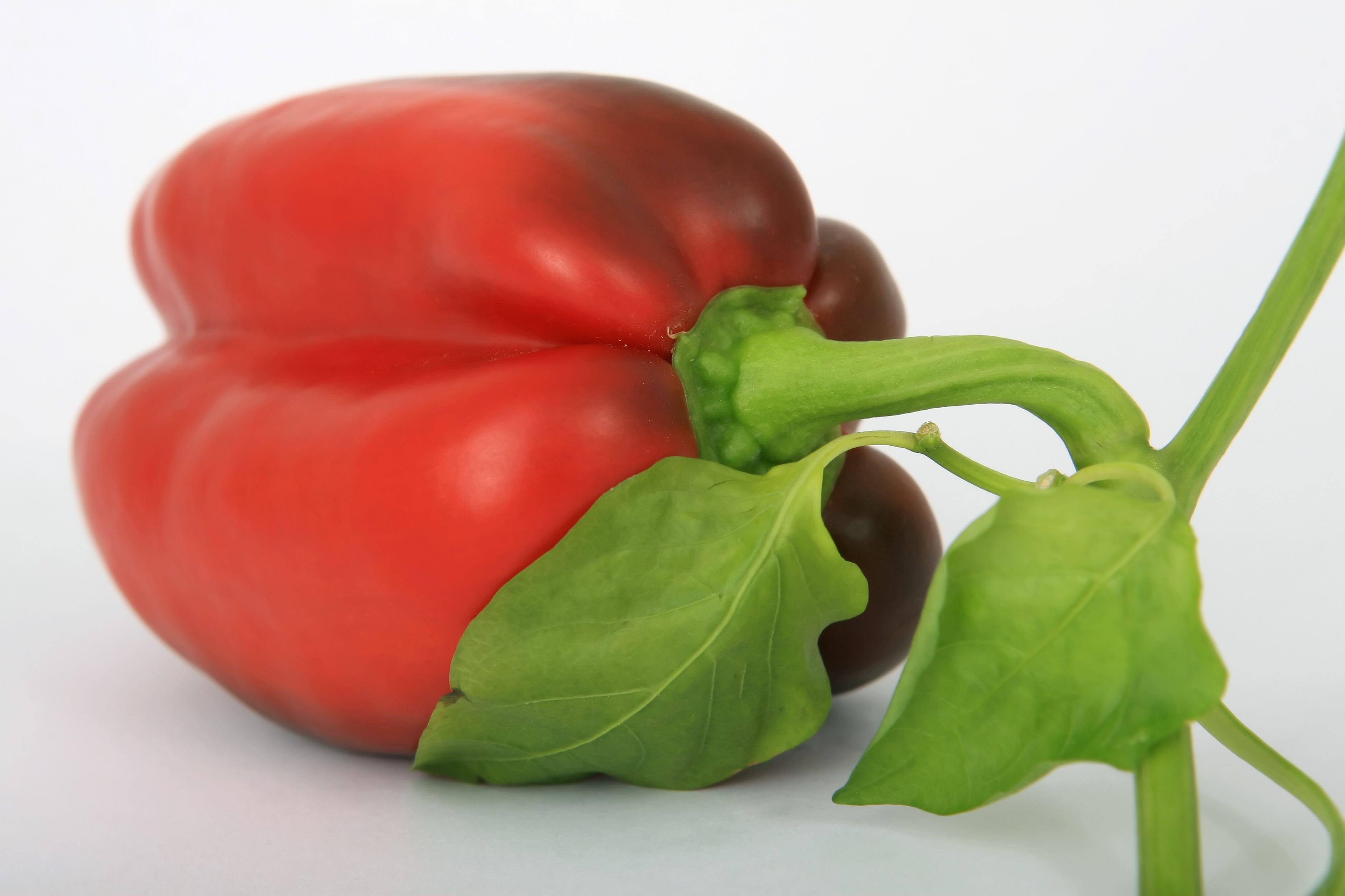 Vegetables-09