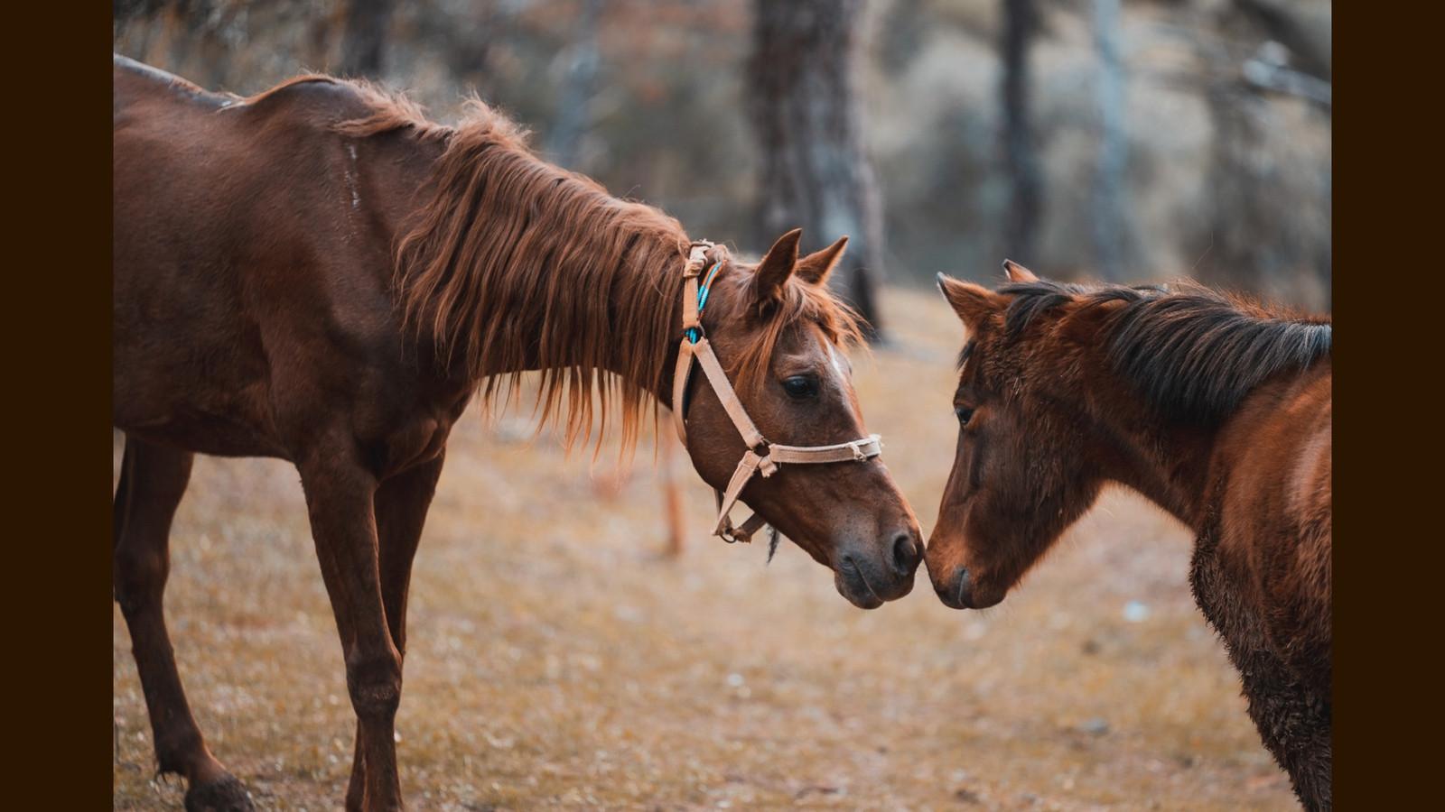 HorsePQ-03.JPG