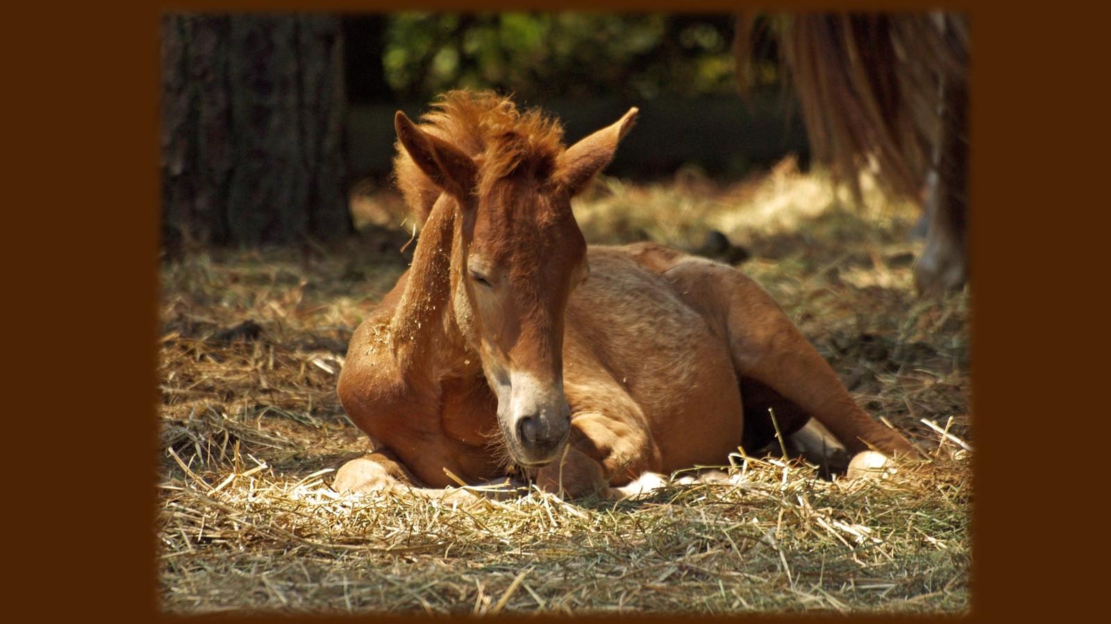 HorsePQ-06.JPG