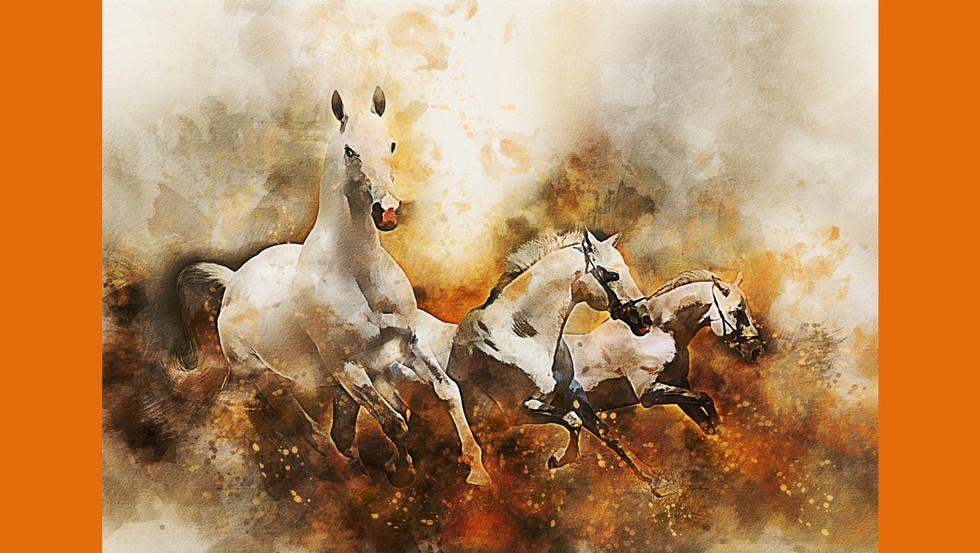 HorsePQ-19.JPG