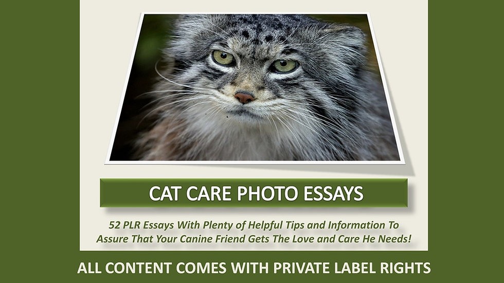 Cat Care Photo Essay Collection