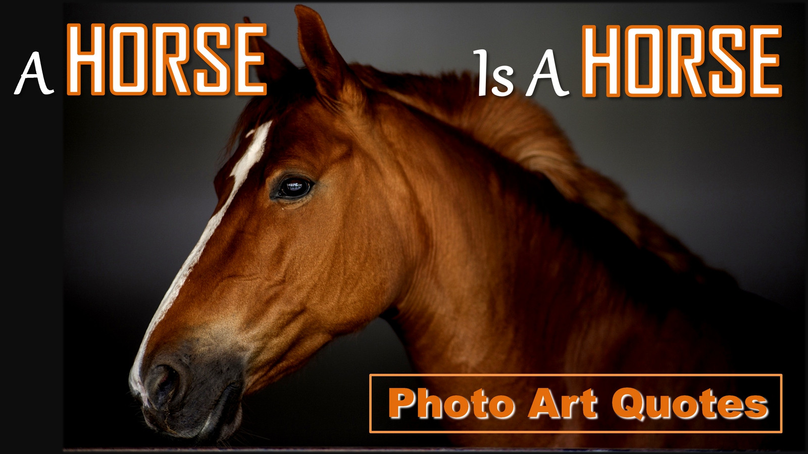 A Horse Is A Horse Photo Art Quotes