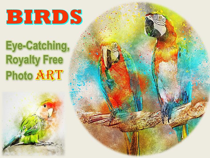 BIRDS Photo Art Collection