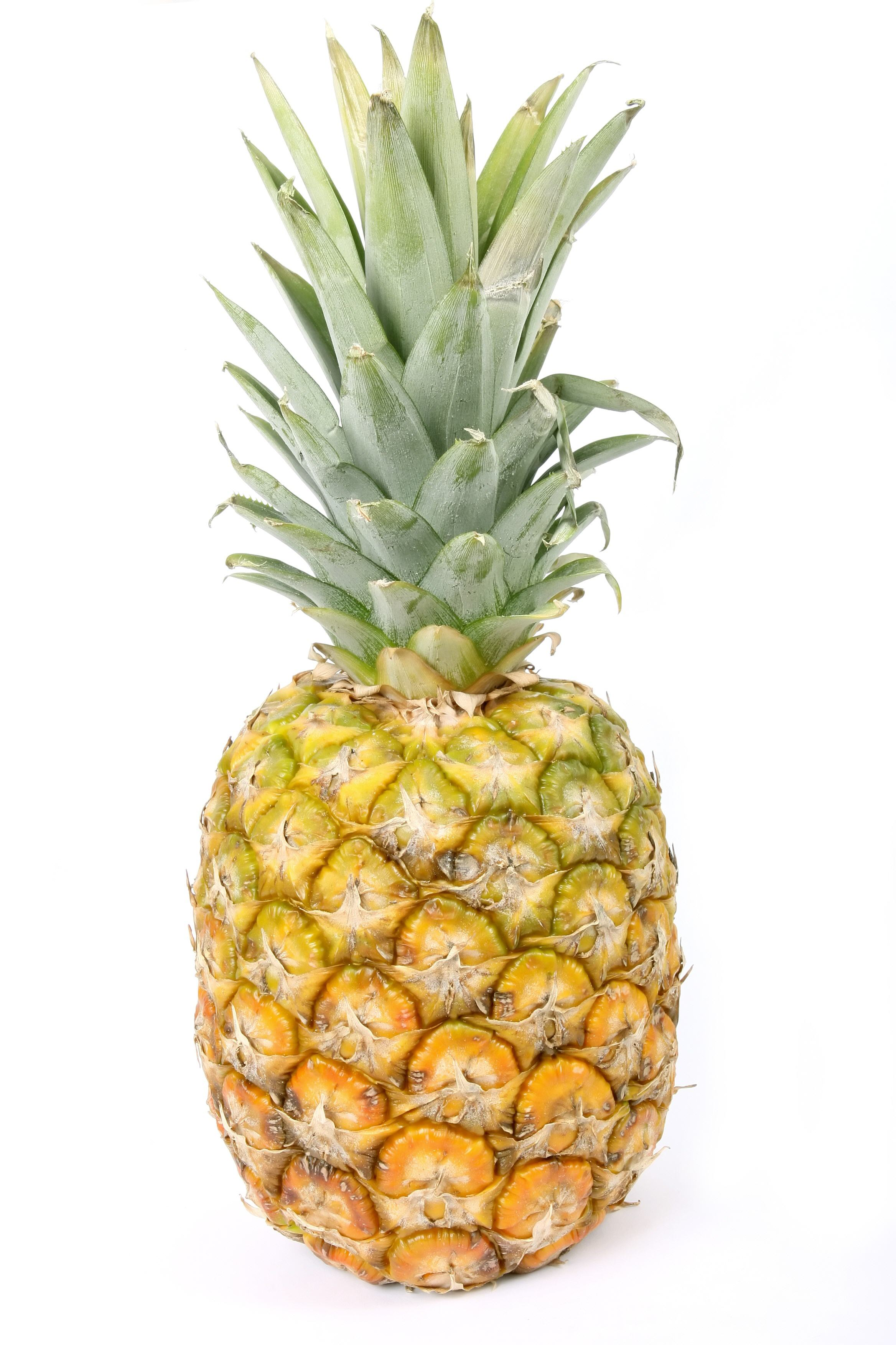 Fruit-04