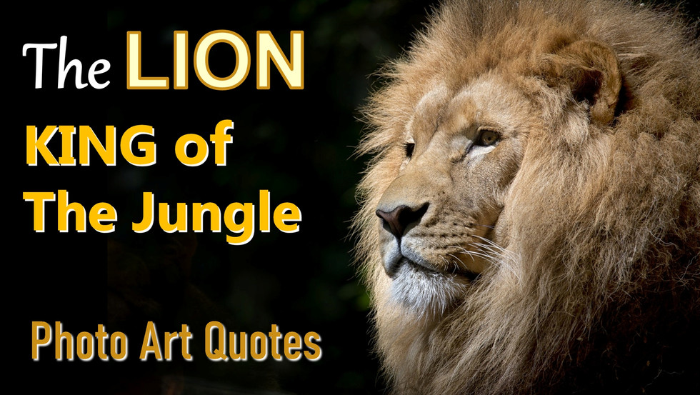 The Lion: King of The Jungle Photo Art Quotes