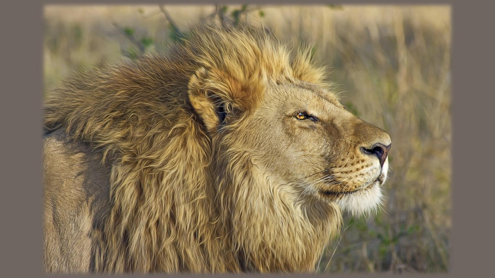 LionPAQ-14.JPG