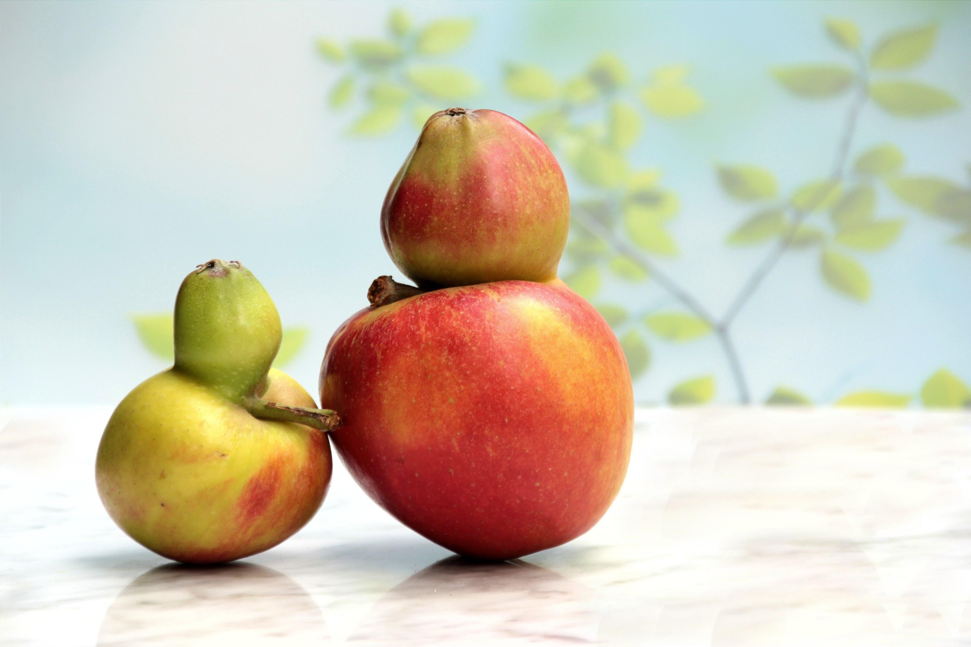 Fruit-35