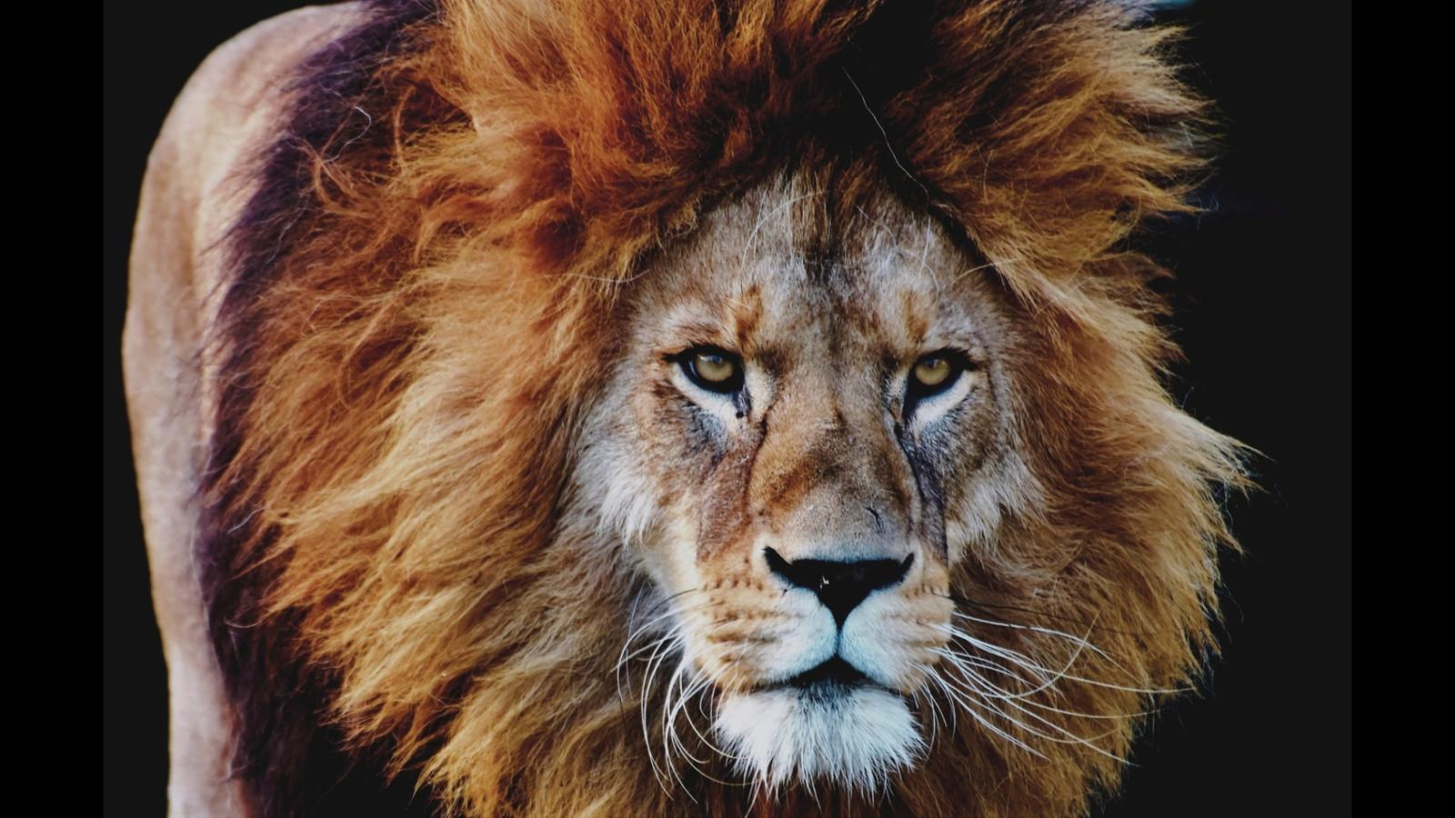 LionPAQ-04.JPG