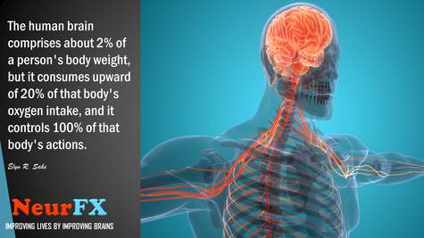The human brain comprises about 2 percent of a person's body weight...