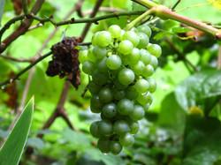 Wine-13