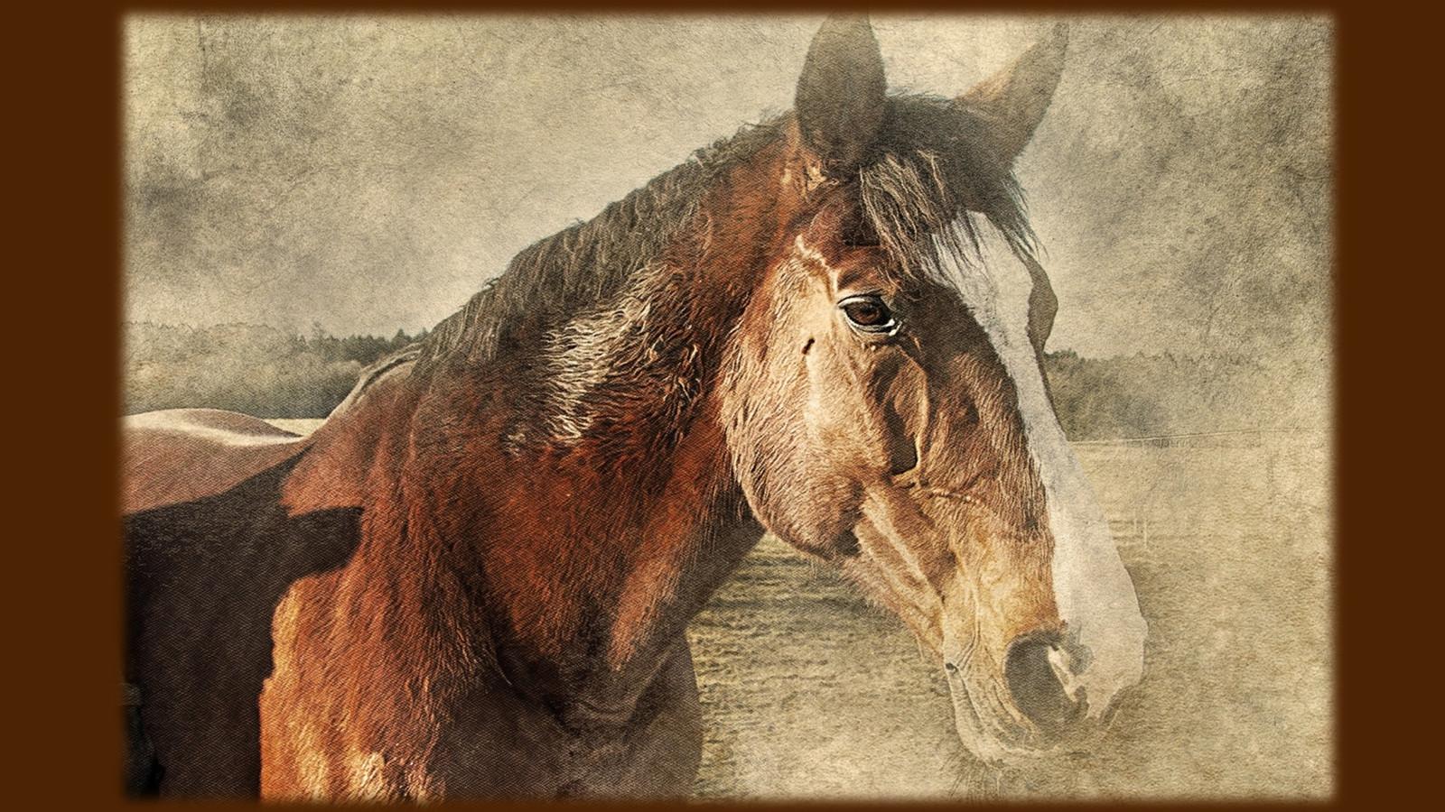 HorsePQ-05.JPG