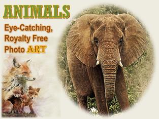 ANIMALS Photo Art Collection