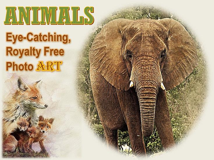 ANIMAL Photo Art Collection