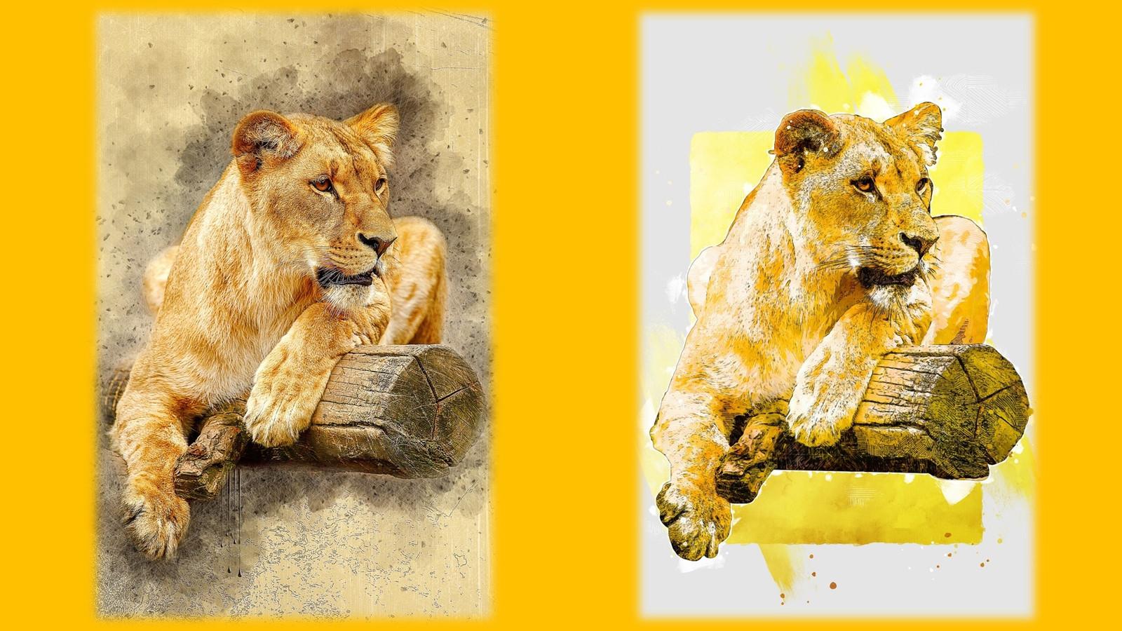 LionPAQ-19.JPG